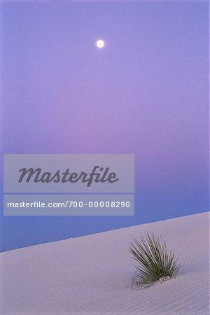 Herbe dune de sable blanc National Monument au Nouveau-Mexique, USA