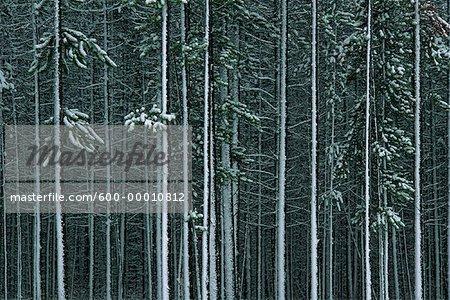 Le Parc National Jasper (Alberta), Canada