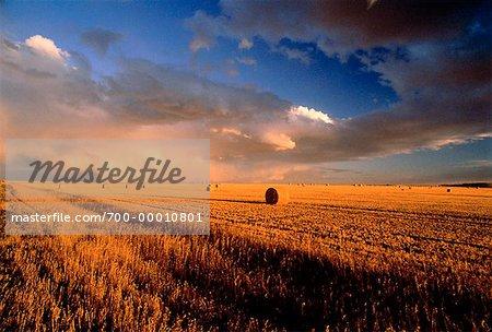 Balles de foin en terrain sud de l'Alberta, Canada