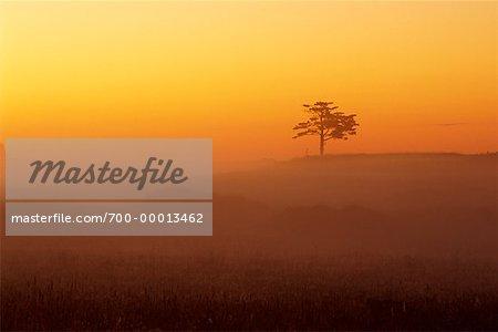 Région de Muskoka (Ontario), Canada-aube