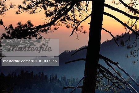 Sequoia et Kings Canyon National Parcs au coucher du soleil en Californie, USA