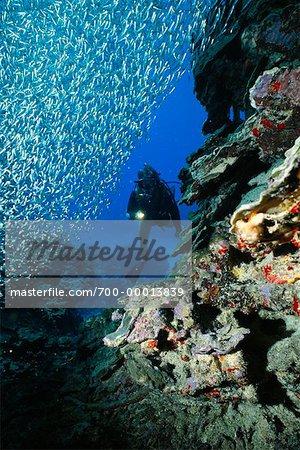 Vue sous-marine de l'école de Silversides, île de Grand Cayman, British West Indies