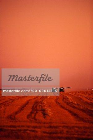 La récolte de blé de la Saskatchewan, Canada