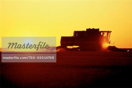 Silhouette de combiner la récolte de blé au coucher du soleil en Saskatchewan, Canada