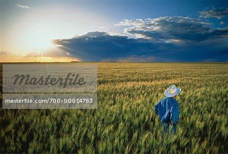 Homme debout en champ au coucher du soleil sud de la Saskatchewan, Canada