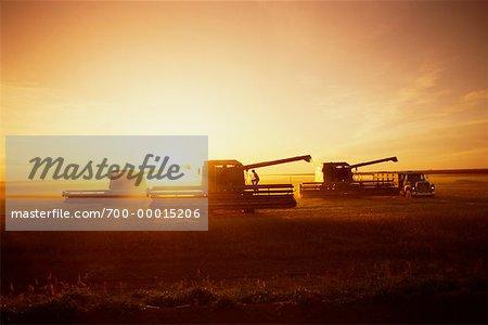 Silhouette des agriculteurs, la récolte de blé avec de la machinerie au coucher du soleil, Saskatchewan, Canada