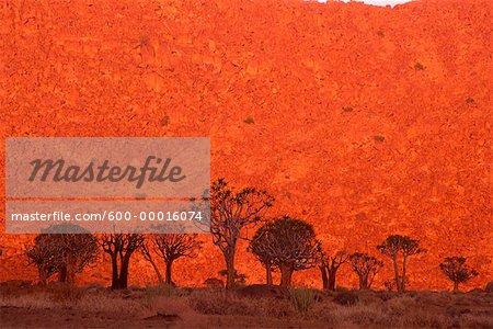 Carquois arbres à Sunrise Kokerboomkloof, Parc National du Richtersveld, Afrique du Sud