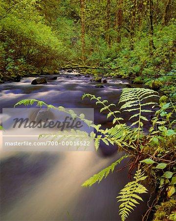Fougères et cours d'eau du fleuve Columbia Gorge Oregon, Etats-Unis