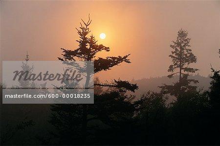 Silhouette des arbres au soleil couchant Fundy National Park New Brunswick, Canada