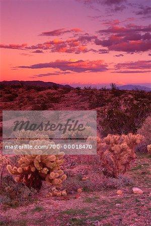 Parc d'état de Carrizo Badlands Anza-Borrego Desert, Californie, Etats-Unis