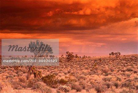 Joshua Tree at Sunset East désert des Mojaves en Californie, USA