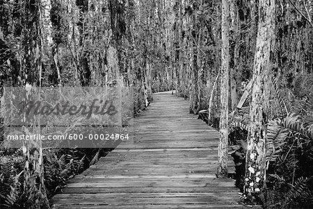 Promenade à travers les Everglades en Floride, USA