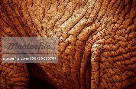 Gros plan d'une peau d'éléphant