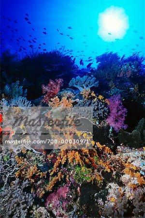 Vue sous-marine des récifs coralliens République de Palau, Micronésie