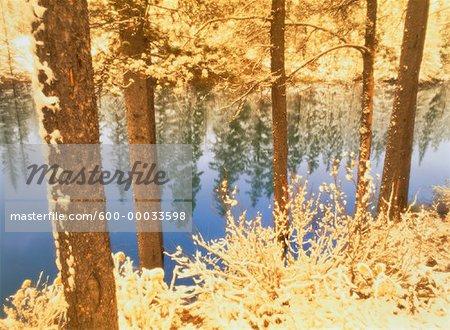 Chute de neige fraîche près de Hinton, Alberta, Canada