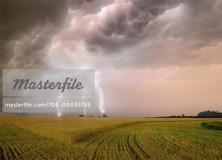 Foudre sur le champ de l'Alberta, Canada