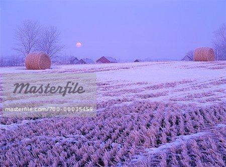 Bottes de foin dans le champ en hiver au coucher du soleil Sherwood Park, Alberta, Canada