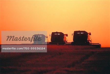 La récolte de blé au coucher du soleil en Saskatchewan, Canada