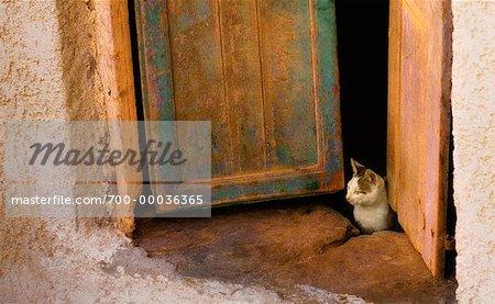 Chat en porte Santorin, îles Cyclades Grèce