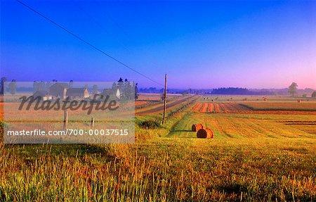 Champ de l'agriculteur au lever du soleil de la Reine County, Prince Edward Island, Canada