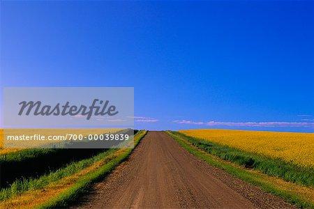 Route et Canola terrain sud de l'Alberta, Canada