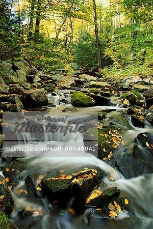 Klaxton Creek in Autumn Haliburton, Ontario, Canada