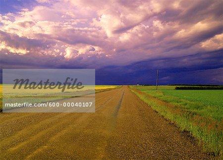 En passant la tempête et le champ de Canola près de Three Hills, Alberta, Canada