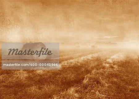 Balles de foin et de brouillard près de Lacombe, Alberta, Canada