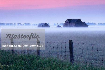 Paysage campagnard à l'aube avec la brume, la péninsule Bruce, Ontario, Canada