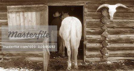 Cowboy Leading Horse dans la grange