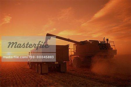 Combiner et camion à grains au coucher du soleil, Three Hills, Alberta, Canada