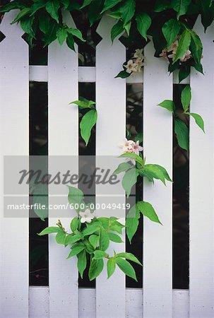 Gros plan de clôture blanche et fleurs Kingston, Ontario, Canada