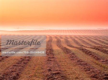 Andainé Field at Dawn Edmonton, Alberta, Canada