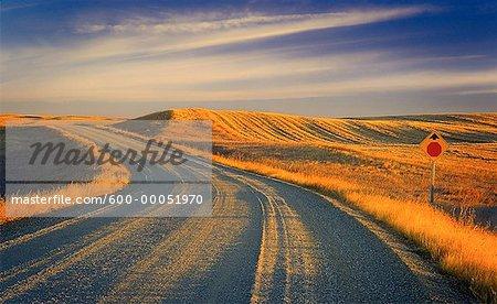 Route de campagne et le paysage de la Saskatchewan, Canada