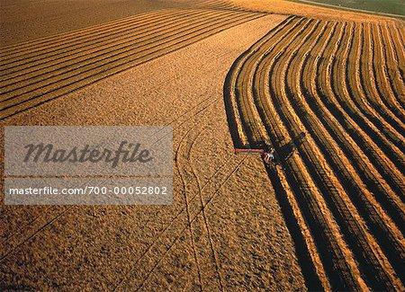 Vue aérienne de l'andainage blé Carberry, Manitoba, Canada