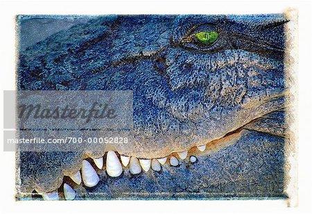 Gros plan d'eau salée Crocodile Queensland, Australie