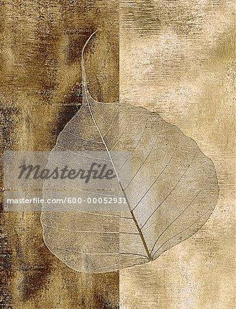 Gros plan des feuilles squelette de l'arbre Bo
