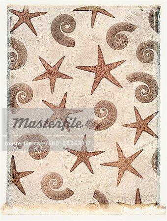 Starfish and Nautilus Shells