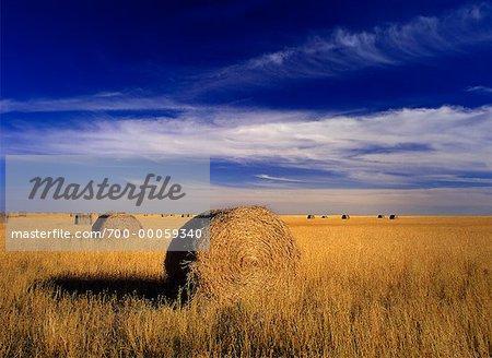 Bottes de foin dans le champ près d'Estevan (Saskatchewan) Canada