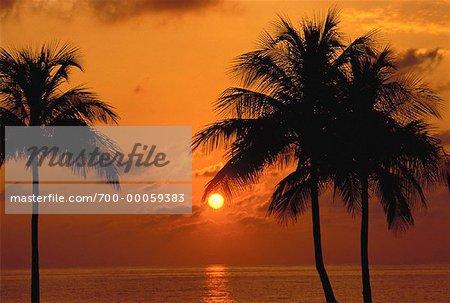 Silhouette de palmiers au coucher du soleil, Fort Lauderdale, Florida USA