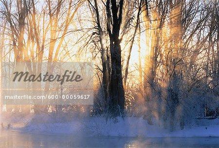 Lever du soleil à travers les arbres en hiver, la rivière Mississippi, Carleton Place, Ontario, Canada