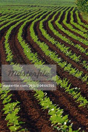 Vue de la région des terres agricoles-Deux Sevres, France