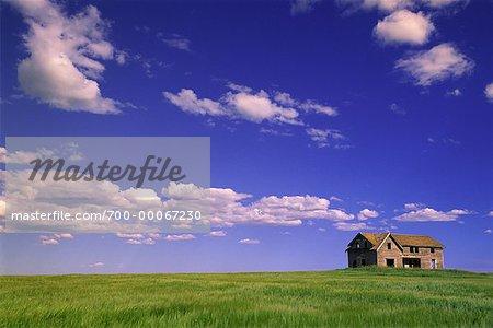Ferme abandonnée et champ Crossfield, Alberta, Canada