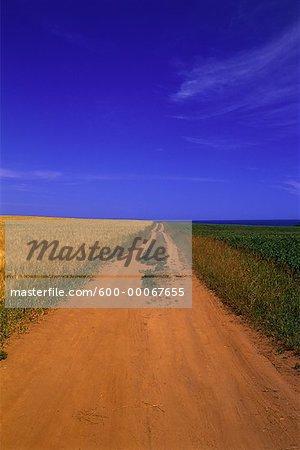 Field Crops and Dirt Road, Prince Edward Island, Canada