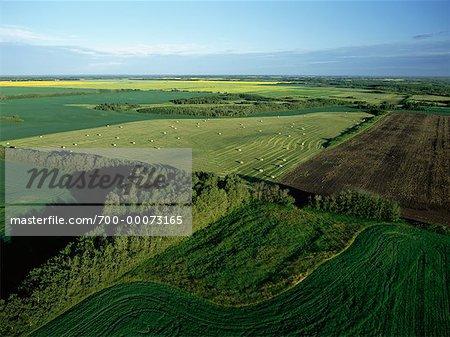 Aerial View du Canola et des champs de luzerne, près de Russell, Manitoba Canada