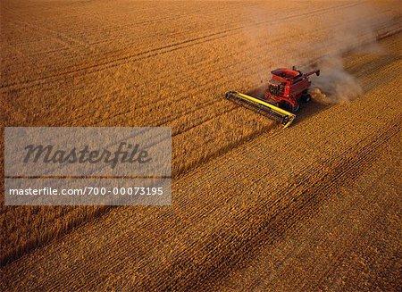 Vue aérienne du blé récolte Hamiota, Manitoba, Canada