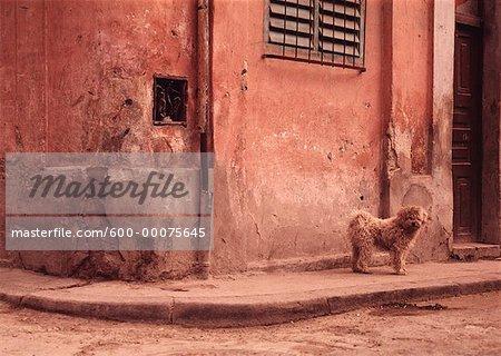 Chien debout sur le coin de la rue, la Havane, Cuba