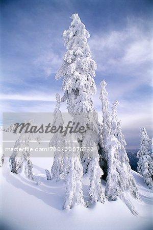Couverte de neige, arbres et montagnes paysage côte Colombie-Britannique, Canada