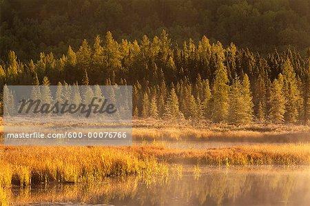 Ruisseau Costello, arbres et brume, Parc Provincial Algonquin, Ontario, Canada