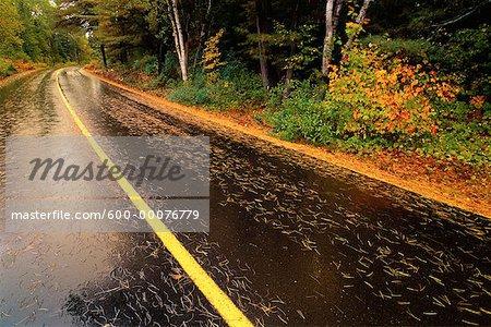Opeongo Lake Road et arbres à l'automne, le Parc Provincial Algonquin, Ontario, Canada